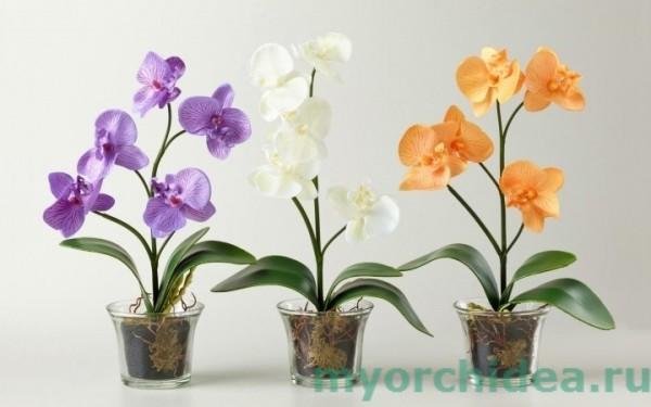 Полив цветущей орхидеи фото