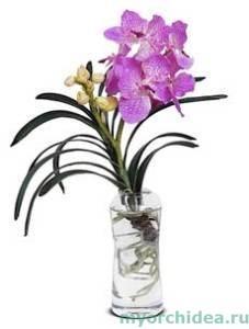 Ванда в стеклянной вазе фото