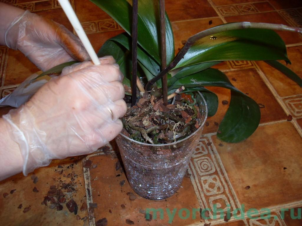 схема освещения для орхидей