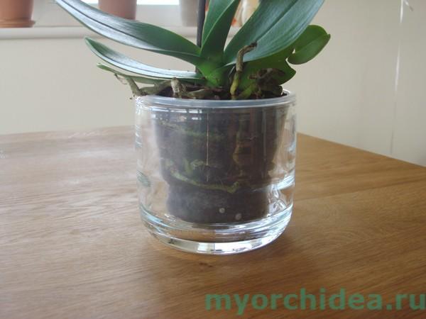 Прозрачный горшок для орхидеи фото
