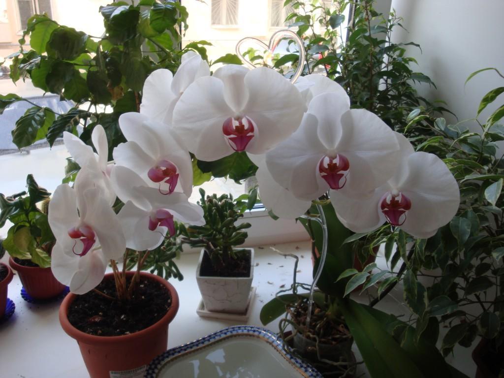 Орхидеи  Home  Facebook