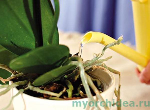 Подкормка орхидеи фото