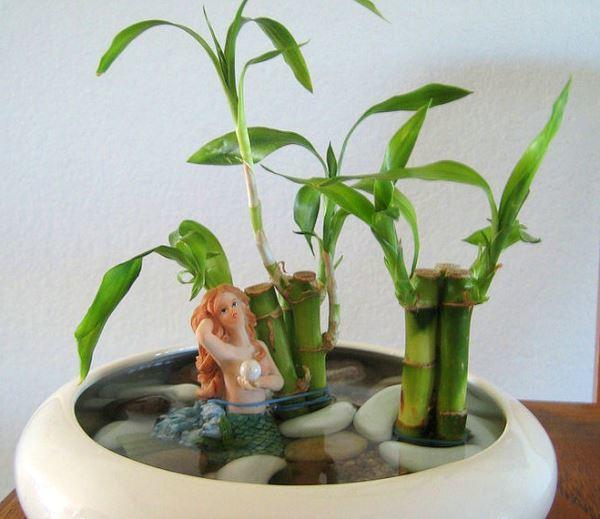 счастливый бамбук в воде