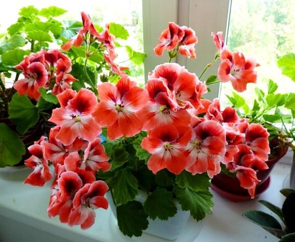 Какие комнатные растения очищают воздух в комнате?