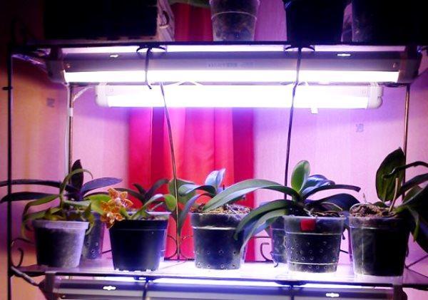 лампа для орхидей