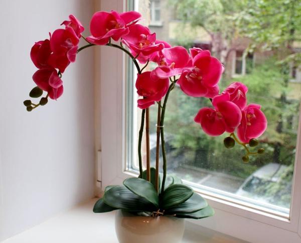 Когда и как пересаживать орхидею после покупки видео