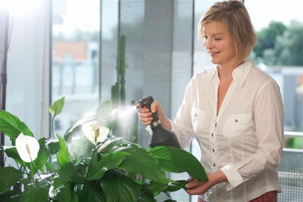 Опрыскивание растения из пульверизатора