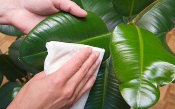 Промывание листков мыльным раствором
