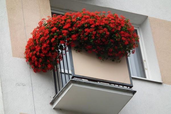 Красная герань на балконе