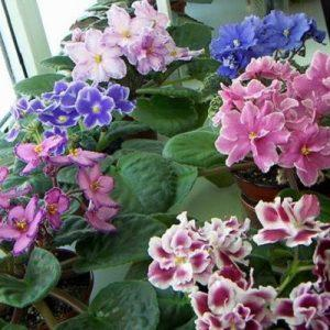 Сочетание цветов в атласных лентах