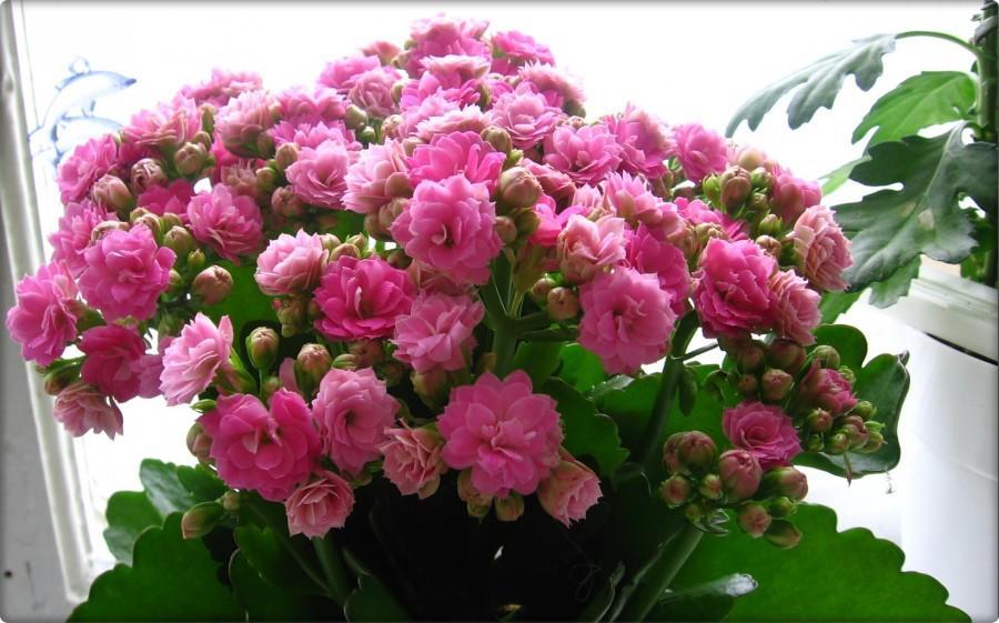 Цветущее растение на снимке