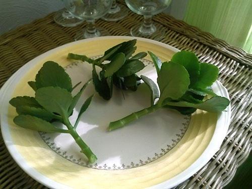 Опавшие листья цветка на тарелке