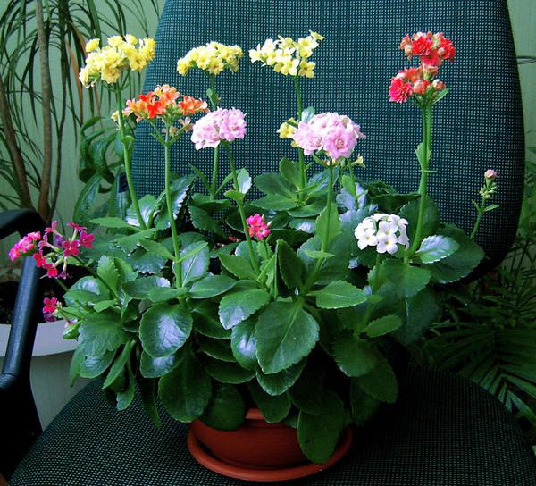 Большое растение цветет на фото