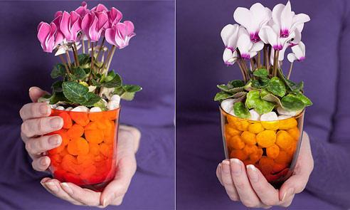 Красивый декоративный цветок в гальковой почве