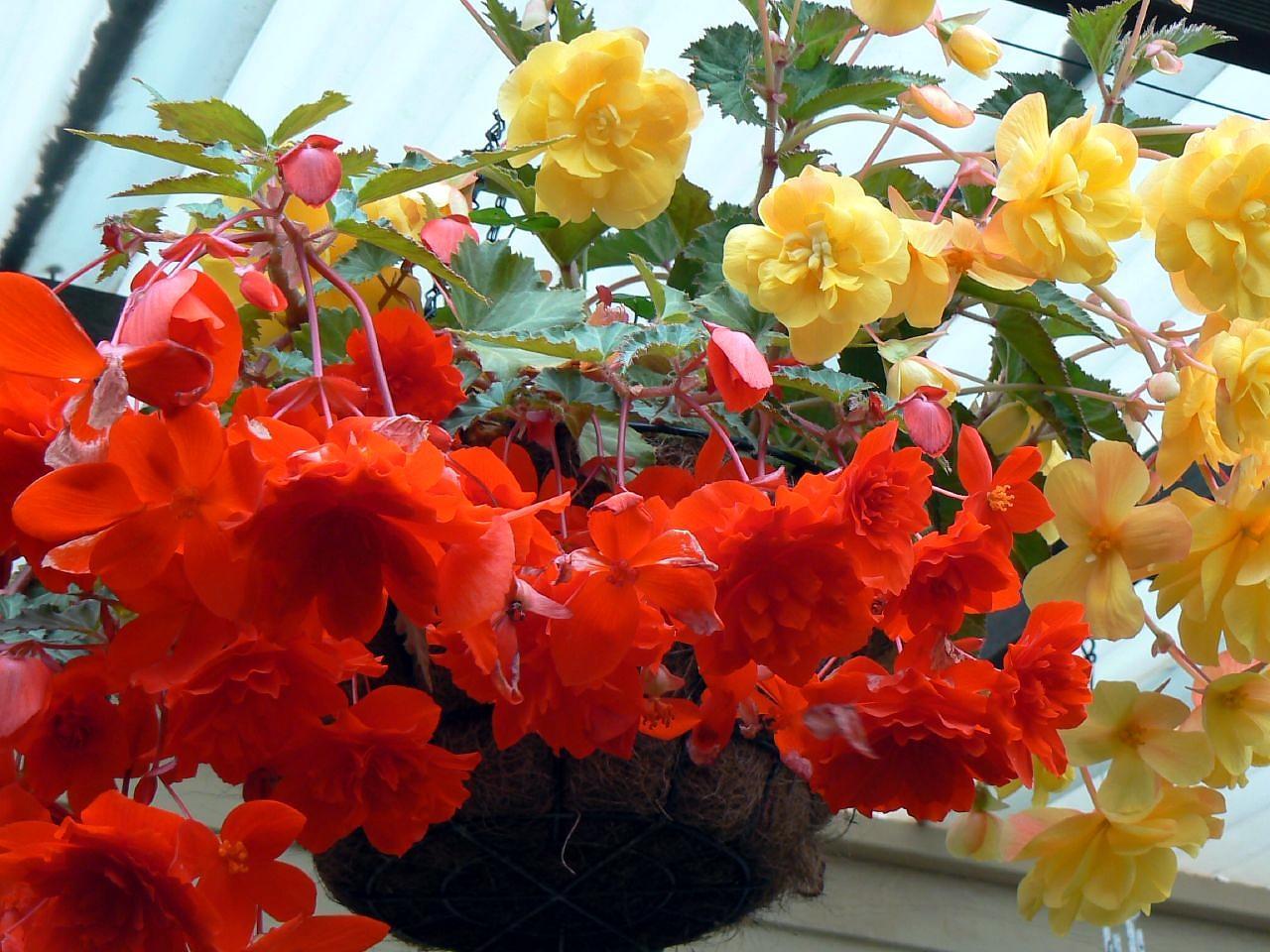 Декоративный цветок на окне