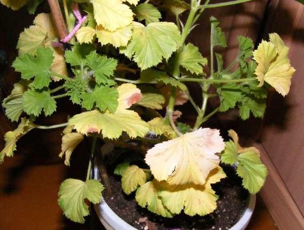 Пример желтых листьев на снимке
