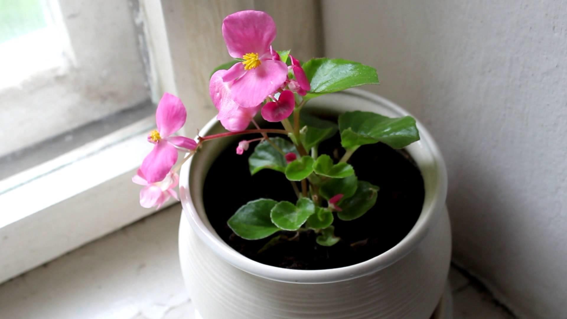 Горшок с цветком на подоконнике