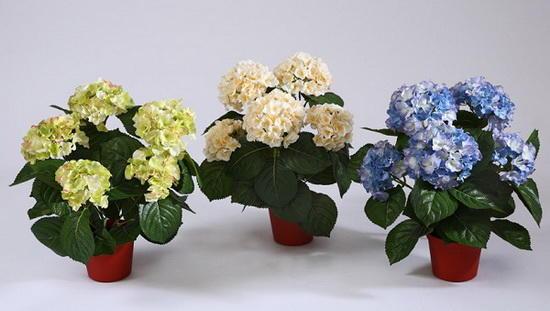 Разные сорта цветка на фото