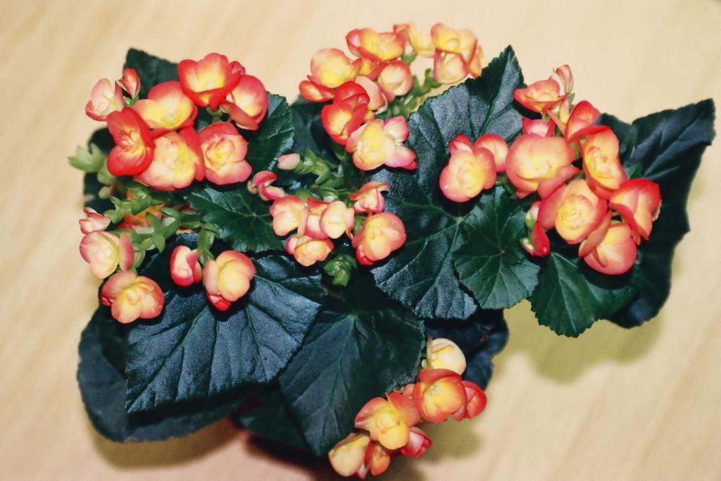 Освещение в комнате для выращивания цветка