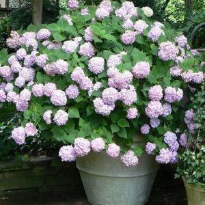 Красивое растение в ведре