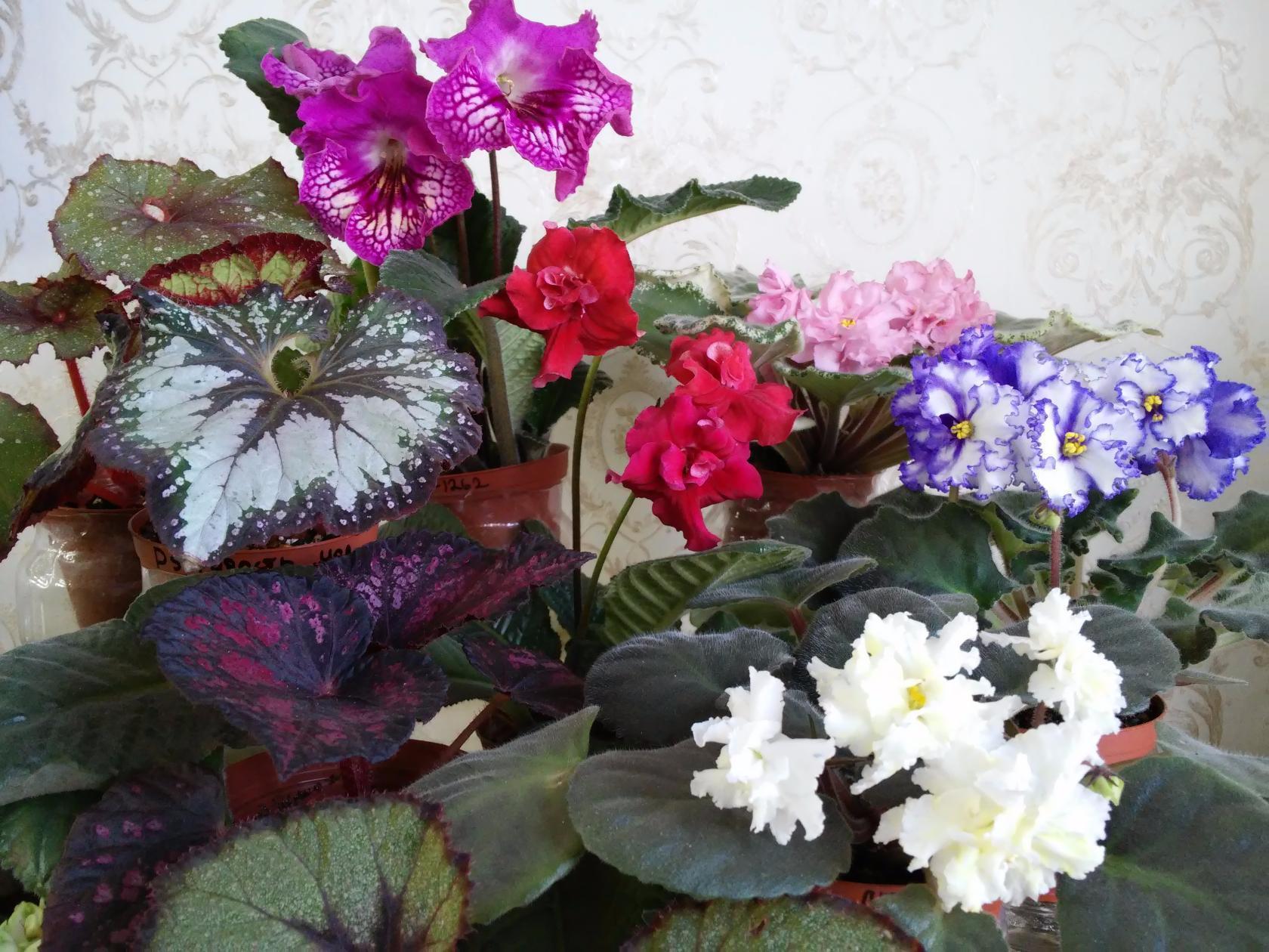 Красивая композиция из цветов