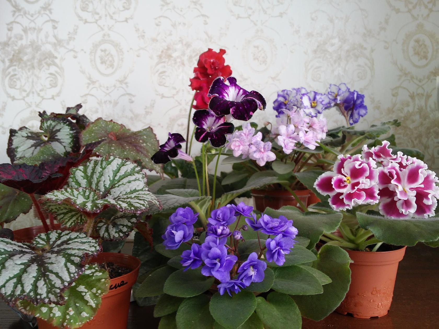 Комнатные растения разных сортов