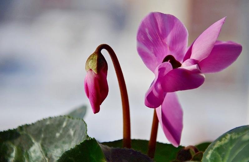 Цветок, подверженный влиянию болезней