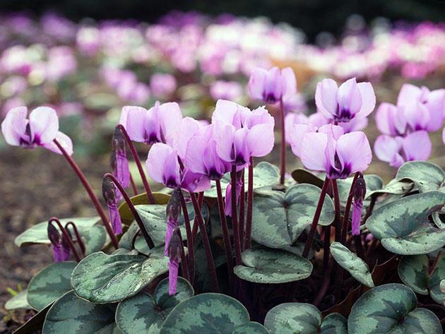 Цветок с фиолетовым оттенком фото