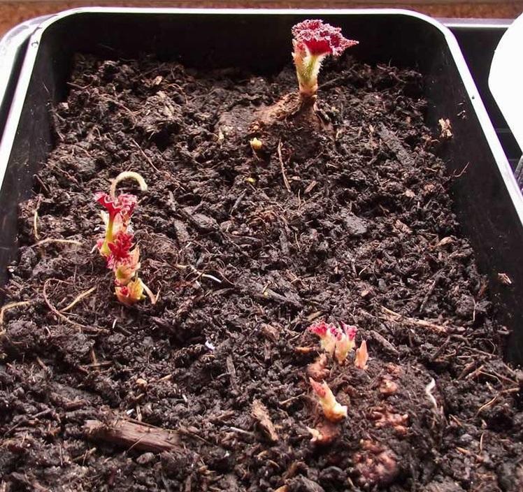 Грунт, подготовленный перед пересадкой растения