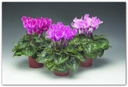 Красивый и ухоженный цветок