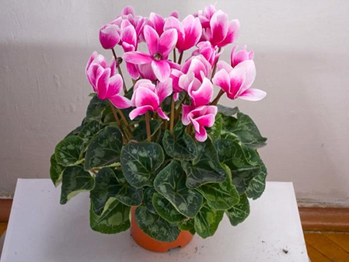 Как выглядит ухоженное растение