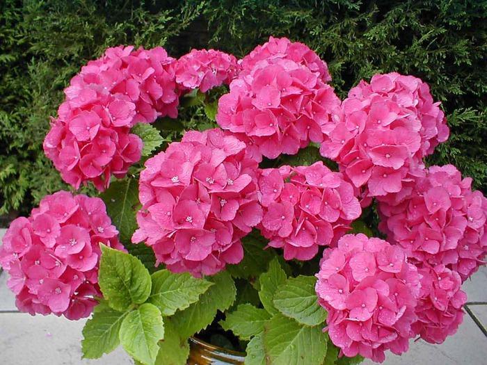 Цветение растения на фото