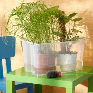 Растения готовятся к поливу