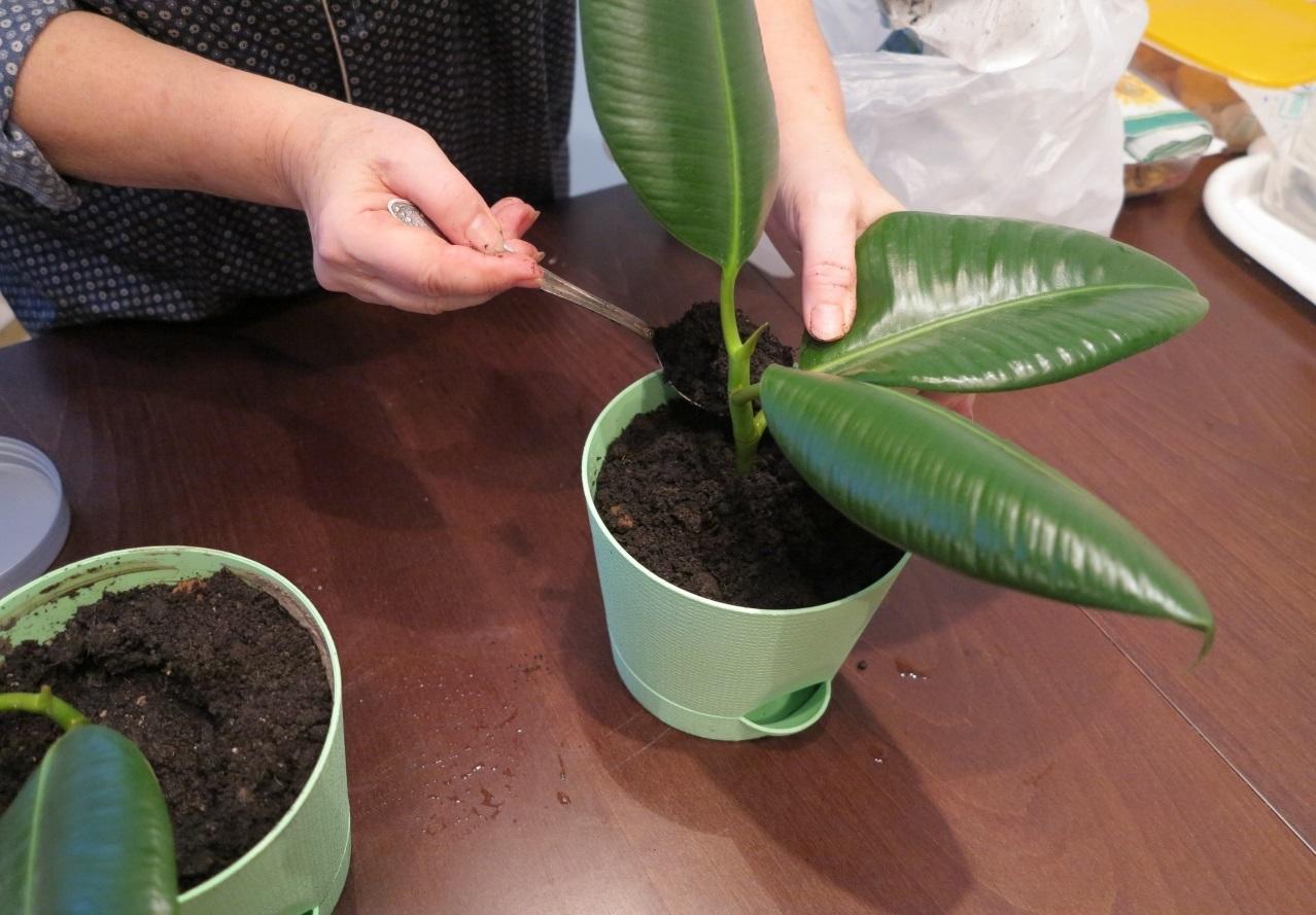 Грунт для выращивания черенков