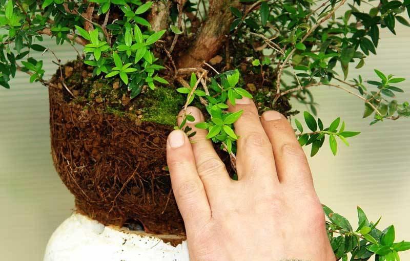 Как выглядит дренаж для растения
