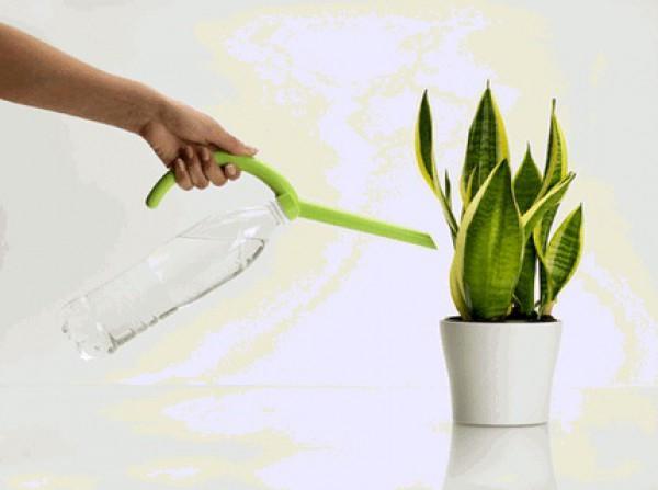 Полив растений при помощи лейки