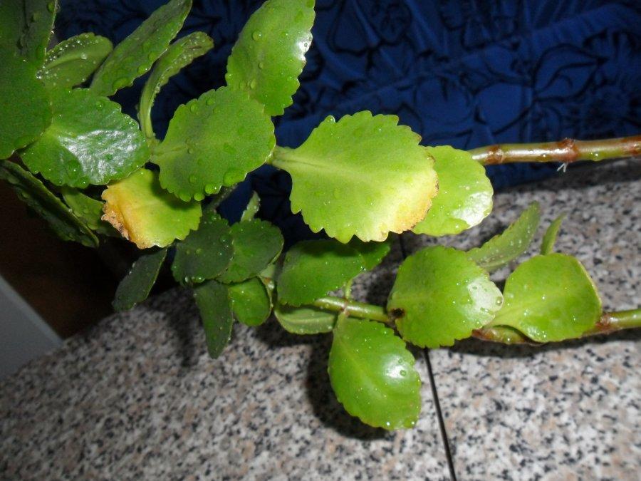Пожелтевшие листья на фото