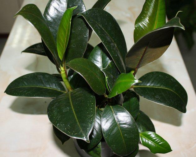 Красивые темно-зеленые листы