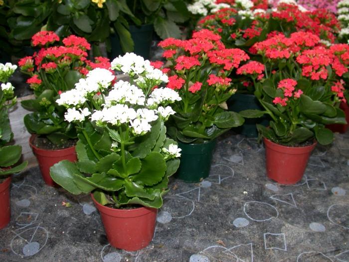 Красивое цветущее растение фото
