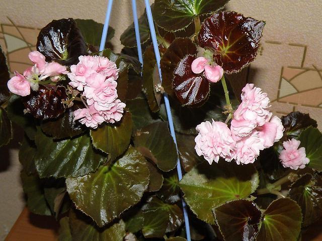 Увядшие листья и цветы растения
