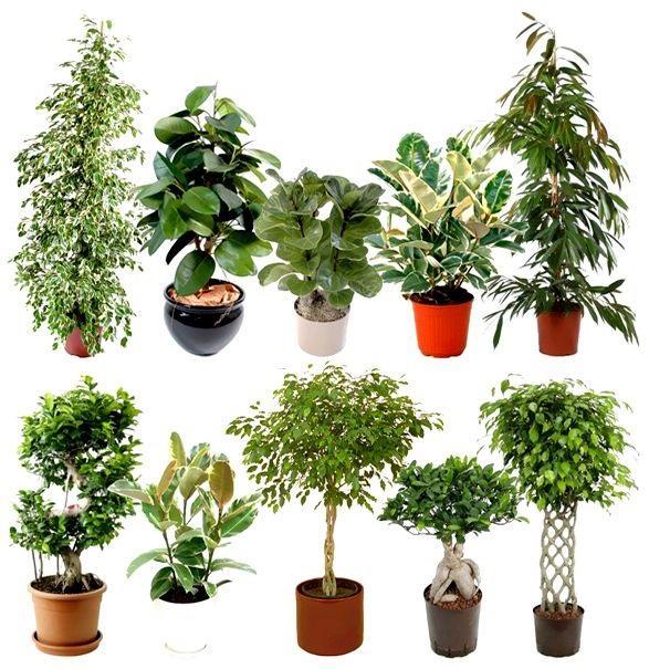 Несколько видов растения на фото