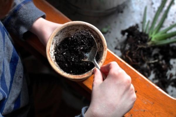 Почва, приготовленная для алоэ