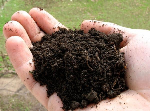 Почва для посадки папоротника