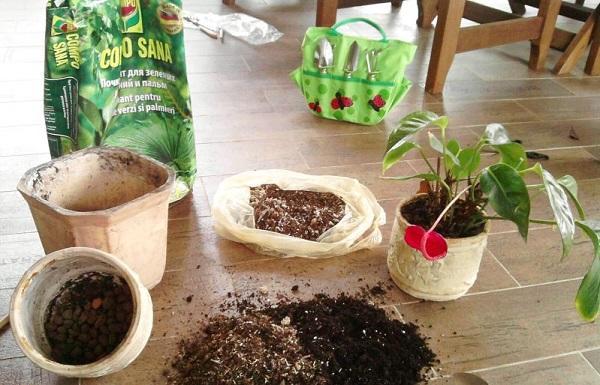Земля и горшок для посадки антуриума