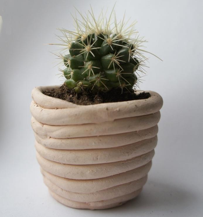 какие бывают кактусы