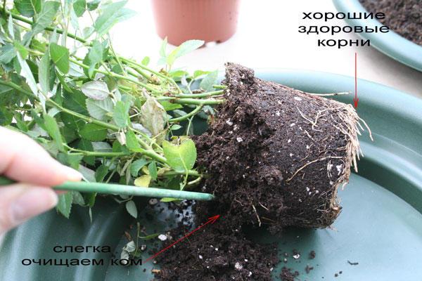 Уход за домашним растением