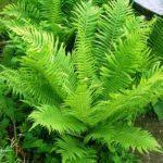 Зеленые листки папоротника
