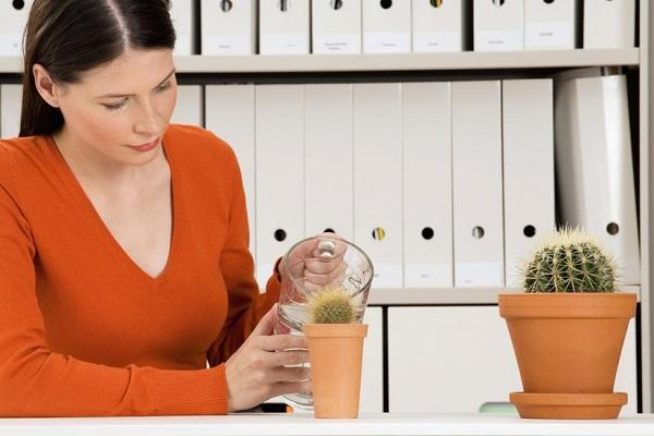 Полив кактусов в домашних условиях