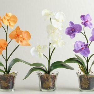 Цветы орхидеи в горшках на столе