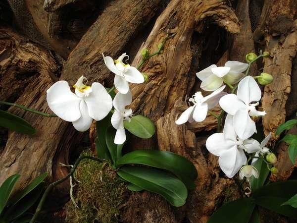 Орхидея в дикой природе
